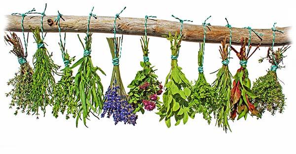Botanical Flavors